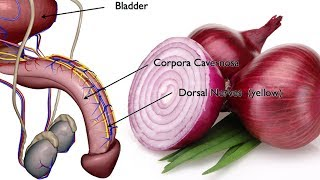 Sexual health benefits of onions antioxidant