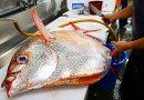 Japanese Street Food – GIANT OPAH SUNFISH Okinawa Japan